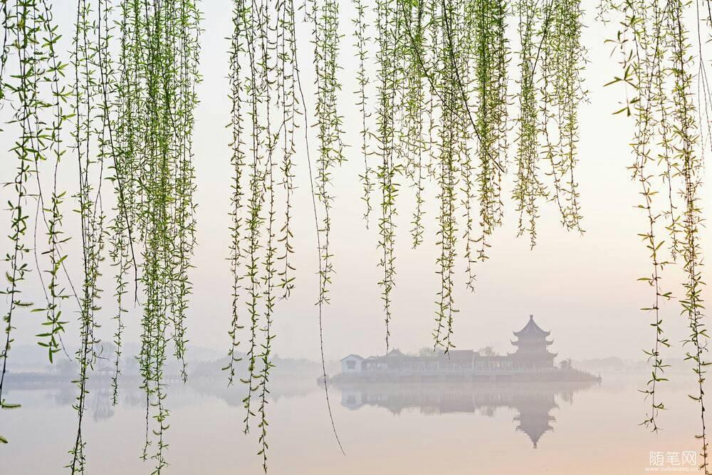 梦幻柳风景图片树如风