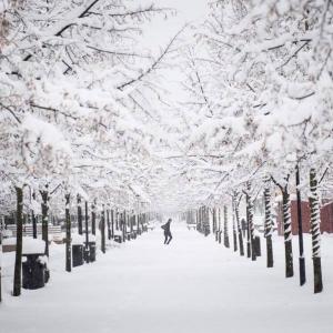 种一地初冬的雪花
