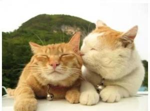 23张图告诉你为什么没有单身猫