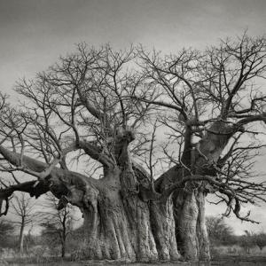 她花了14年找寻世界上最古老的树木