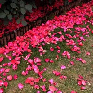 雨声渐微,落一地花红