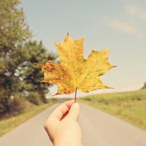 秋色旖旎,醉一场杜鹃雨