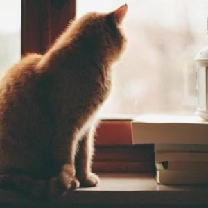 安妮宝贝:猫