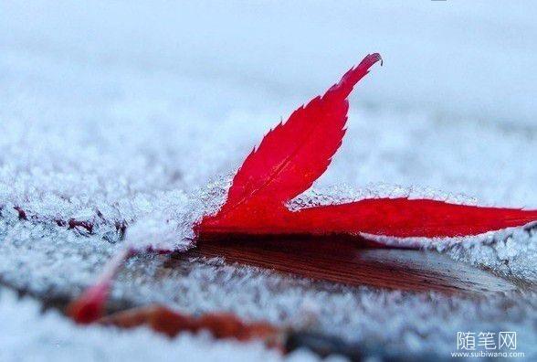 雪花是一朵清芬的花