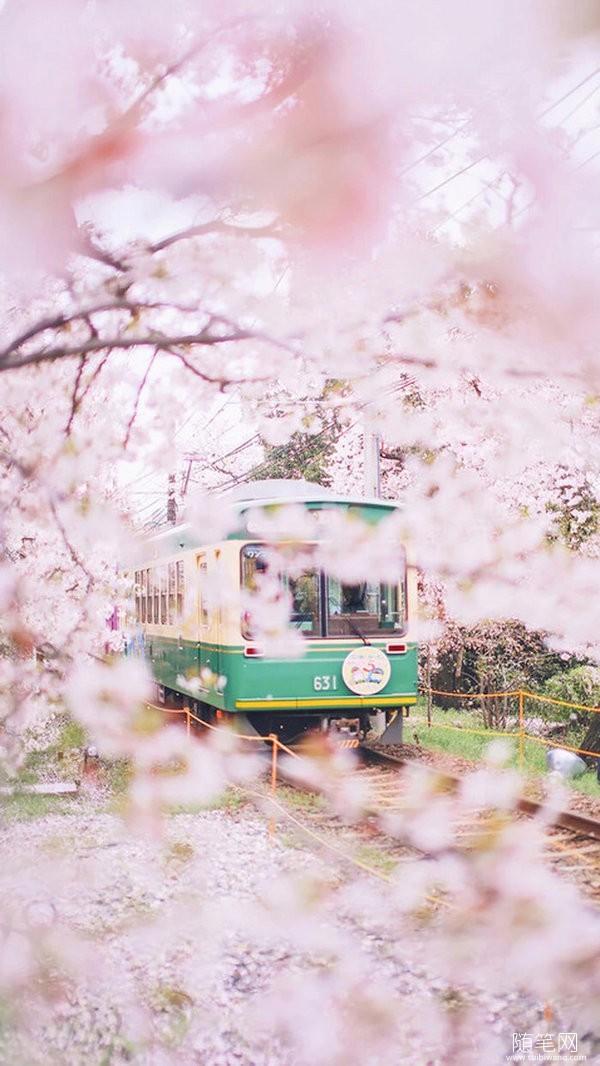 春天,愿共你聆听花开的声音