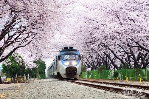 以梦为马,坐上开往樱花的列车