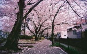春,倾听细雨