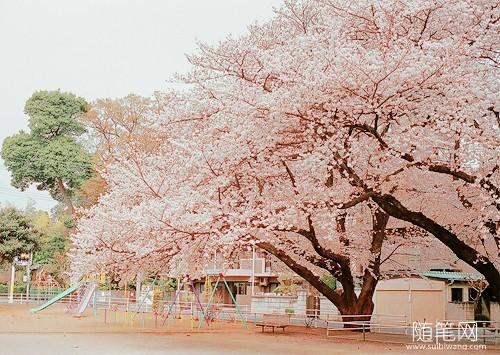 阳春三月,桃花十里