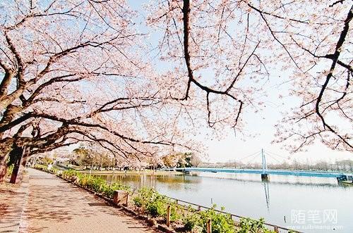 最是一年春好处,静听花开踏诗行